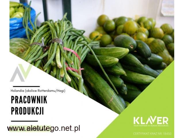 Sortowanie owoców i warzyw praca bez doświadczenia w Holandii-Westland!!!